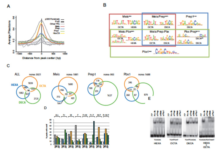 Meis and Prep select different DNA target sequences in the genome